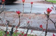 Springingaling